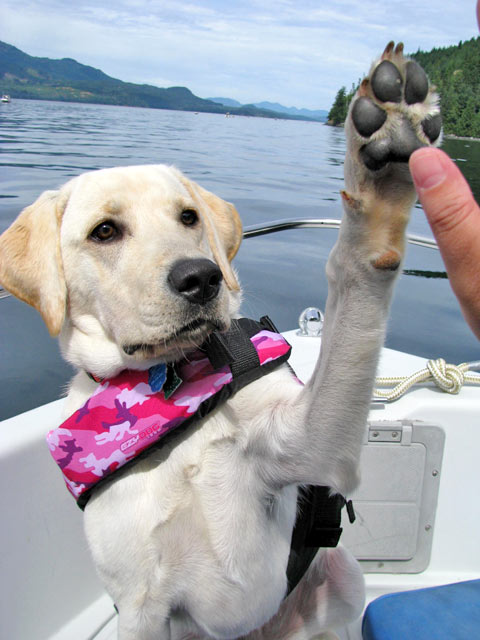 Mazie High-Fiving After Catching a Spring Salmon